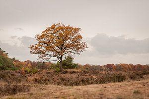 Herfst Ginkelse heide van Nancy van Verseveld