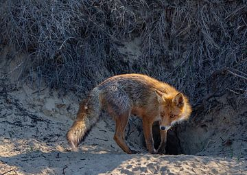 Mutter Fox von Natascha Worseling