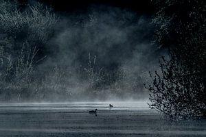 mistig meer in het bos met waterhoentjes