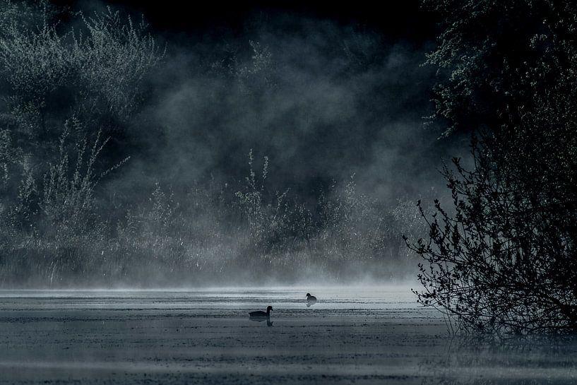 mistig meer in het bos met waterhoentjes van Jovas Fotografie
