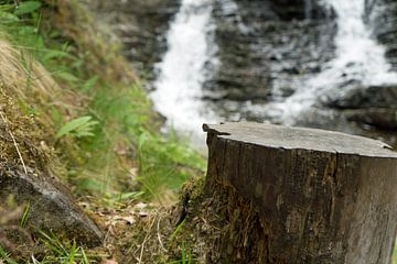 Plodda Falls von Babetts Bildergalerie