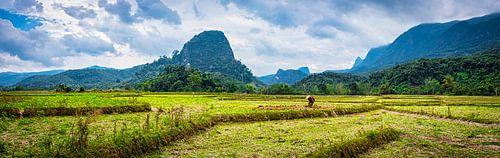 Op het land aan het werk, Laos