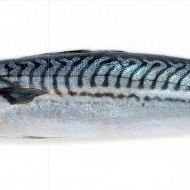 makreel vis van MadebyGreet greetvanbreugel