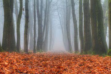 Herfstige boslaan in de mist van