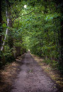 Dreef met wandelpad in het Drongengoedbos van jacky weckx
