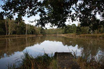 Kleiner See im Wald von whmpictures .com