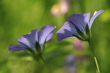 Bloemen paars/blauw van Fotografie Sybrandy