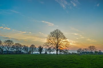 mooie zonsondergang boven een weiland met een eenzame boom