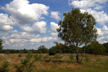 landschap plateaux van Jeroen Grit