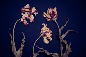 Jardin de tulipes de ronces séchées sur Karel Ham