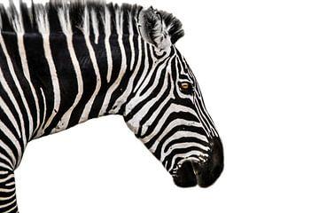 Zebra von Johnny van der Leelie