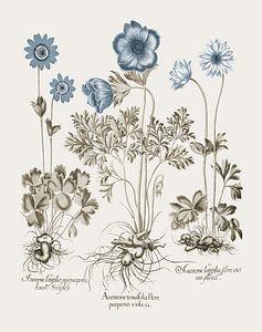 Basilius Besler-Wildblüte violacea