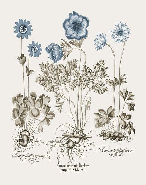 Basilius Besler-Wildblüte violacea von finemasterpiece