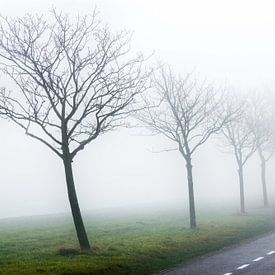 Foggy morning [2] van Jordy Kortekaas