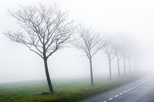 Foggy morning [2] van