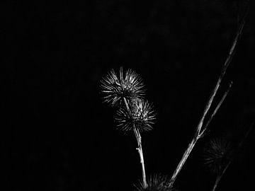 Blume schwarz-weiß von Moniek Salomons