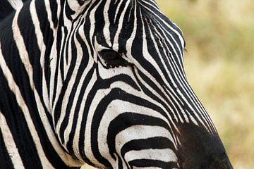 Close up van een zebra, Ngorongoro, Tanzania, Afrika van Henny Hagenaars