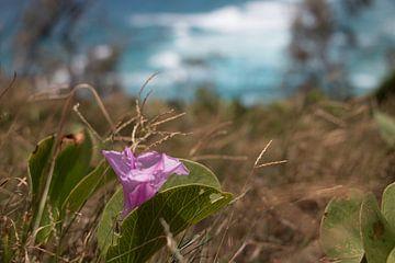 Droge bloem van Milad Hussin