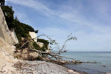 An der Kreideküste von Ostsee Bilder