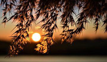Sonnenuntergang von Nikkie Fotografie