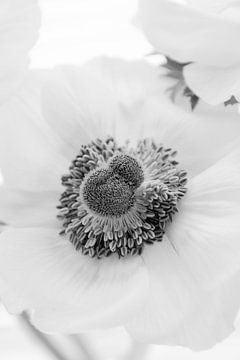Prachtige bloem. van Sanne Van der avoird