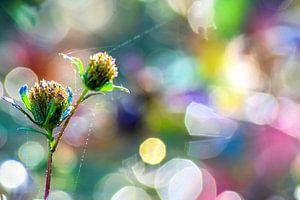 Een prachtig regenboog bokeh van Miranda Rijnen