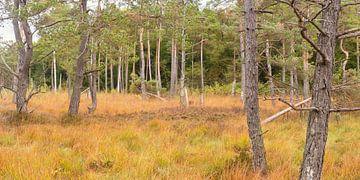 Wurzacher Ried im Herbst