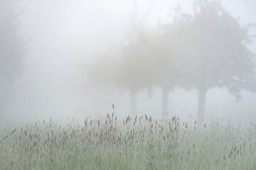 Holland in de mist van Jolanda van Straaten