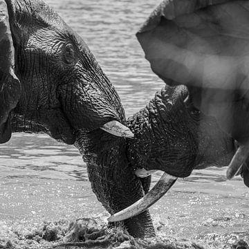 Combattre les éléphants sur Kars Klein Wolterink