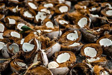 Des noix de coco sur une plantation de cocotiers aux Philippines sur Yvette Baur