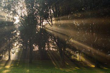 De zon breekt door de hoge bomen en schijnt op het gras van Michel Geluk