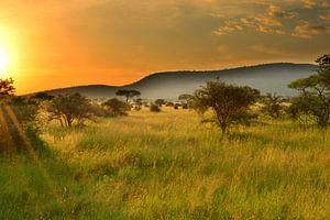 Zonsondergang in de Serengeti, Afrika van