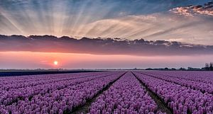 Colours of spring van Judith Veenstra