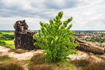 Landschaft mit Bäumen und Felsen im Harz von Rico Ködder