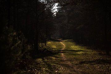 Waldweg von patricia van den bogaart