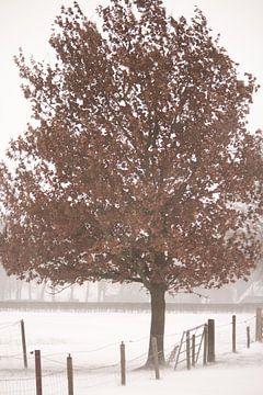 Boom in de sneeuw van Manon Zandt