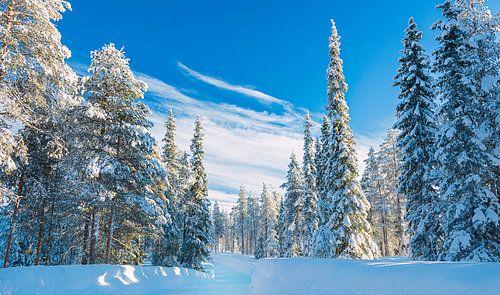 Pad door de sneeuw in het bos in Finland