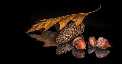 Herfst van Willem  Bentink