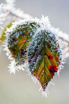 Kleur in de winter van Esther's Photos