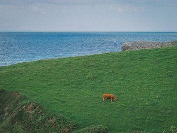 Spaanse koe van Bas Koster