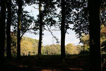 Door de bomen het bos kunnen zien von Peter Hartman