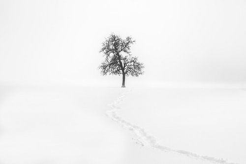 Minimalisme | Eenzame boom in sneeuw met pad van Steven Dijkshoorn