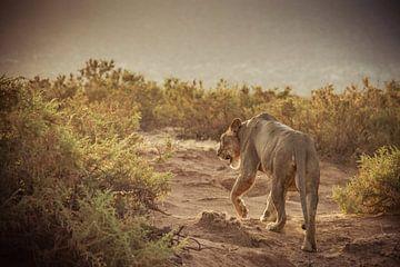 Leeuwin op pad van Dave Oudshoorn