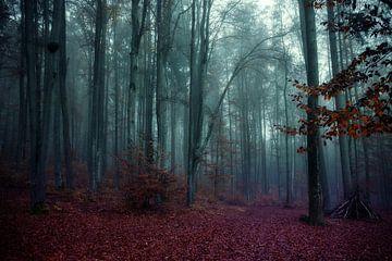 Mystic Wood von Franz Nagler