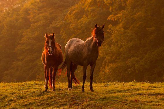 Twee paarden in het licht van de zonsondergang van Paul Wendels