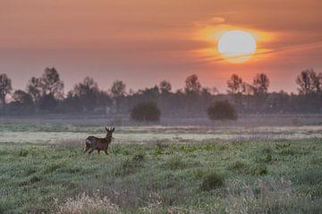 een ree met zonsopkomst van Hans Wolters