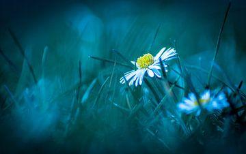witte bloem van Frank Ketelaar