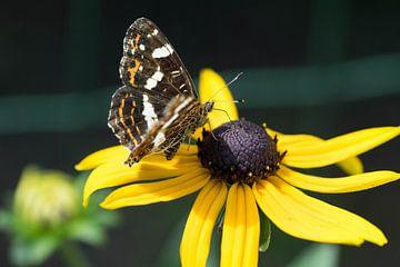Vlinder (landkaartje) op bloem van Kristel van de Laar