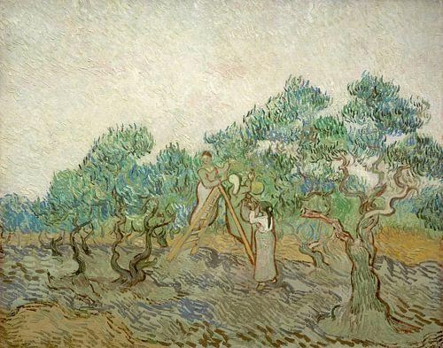 Der Olivenhain, Vincent van Gogh von Liszt Collection