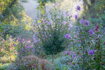 bloemenweelde van Tania Perneel
